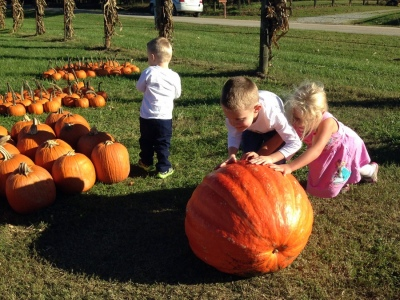 Trying to push the gigantic pumpkin